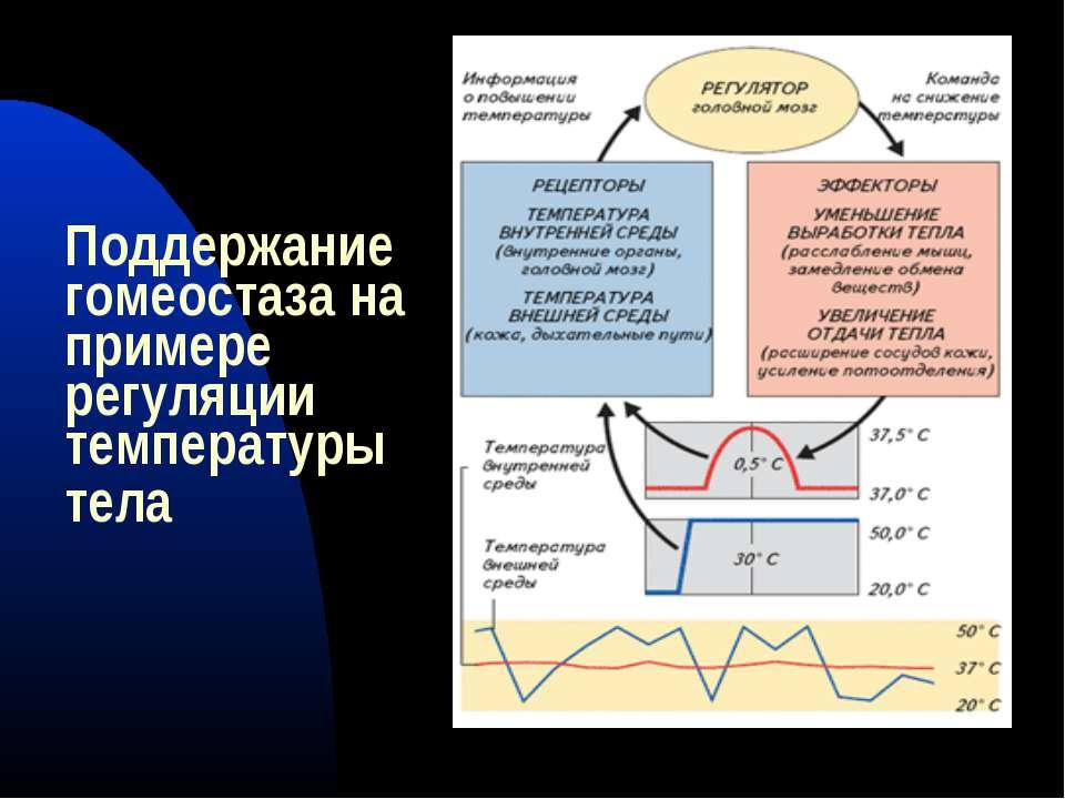 Поддержание гомеостаза на примере регуляции температуры тела