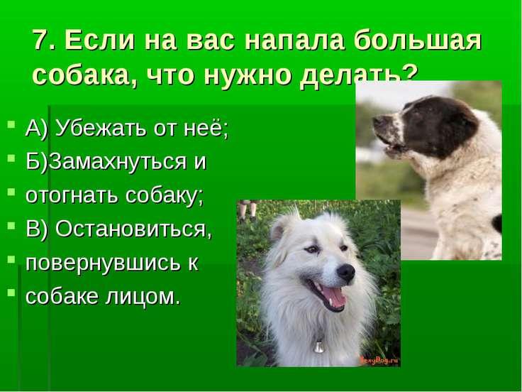 7. Если на вас напала большая собака, что нужно делать? А) Убежать от неё; Б)...