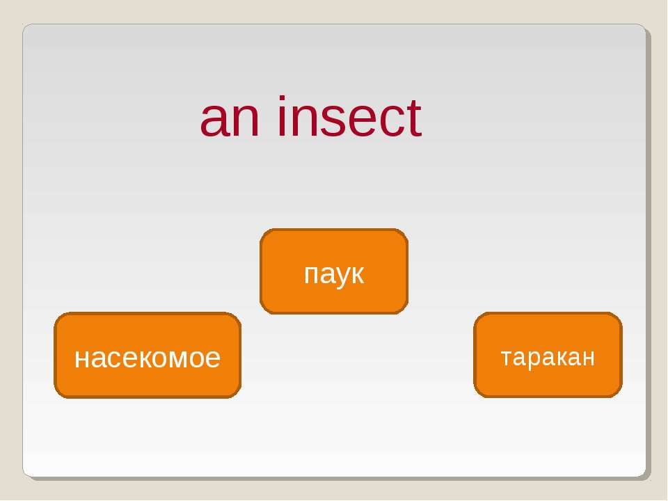 an insect насекомое паук таракан