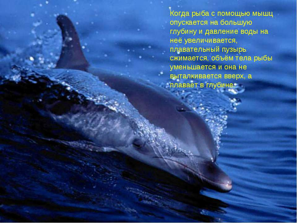 Когда рыба с помощью мышц опускается на большую глубину и давление воды на не...
