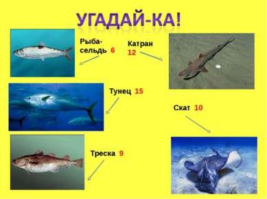 Рыба-сельдь 6 Катран 12 Треска 9 Тунец 15 Скат 10
