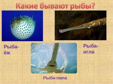 Рыба-ёж Рыба-игла Рыба-пила