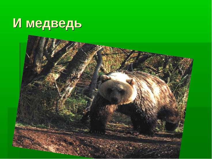 И медведь
