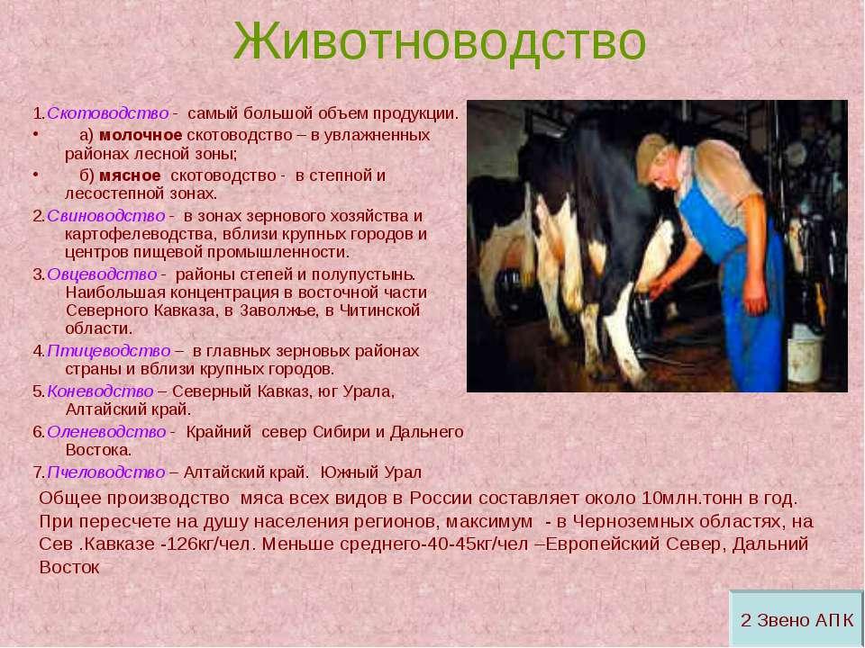 Животноводство 1.Скотоводство - самый большой объем продукции. а) молочное ск...