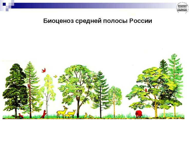 Биоценоз средней полосы России