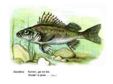 Загадка: Колюч, да не ёж. Живёт в реке …. (Ёрш.)