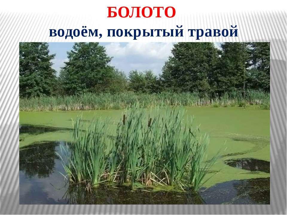 БОЛОТО водоём, покрытый травой