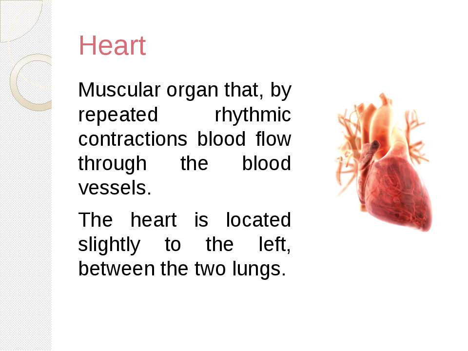 Heart Muscular organ that, by repeated rhythmic contractions blood flow throu...