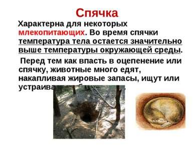 Спячка Характерна для некоторых млекопитающих. Во время спячки температура те...