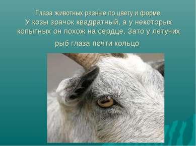 Глаза животных разные по цвету и форме. У козы зрачок квадратный, а у некотор...