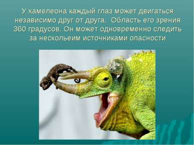 У хамелеона каждый глаз может двигаться независимо друг от друга. Область его...