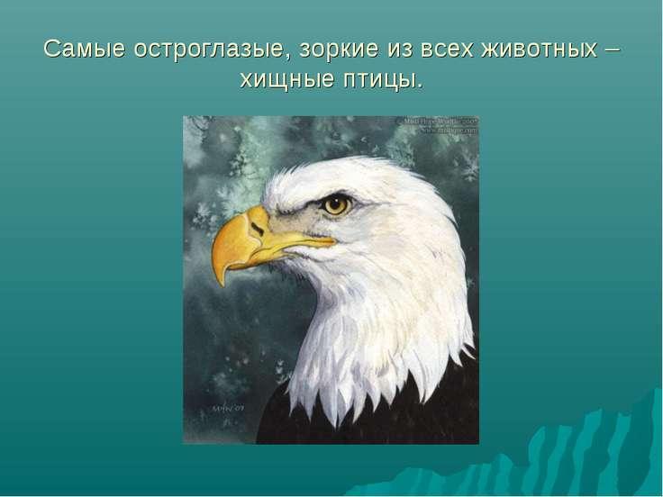 Самые остроглазые, зоркие из всех животных – хищные птицы.