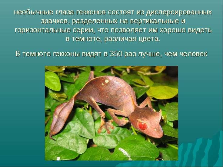 необычные глаза гекконов состоят из дисперсированных зрачков, разделенных на ...
