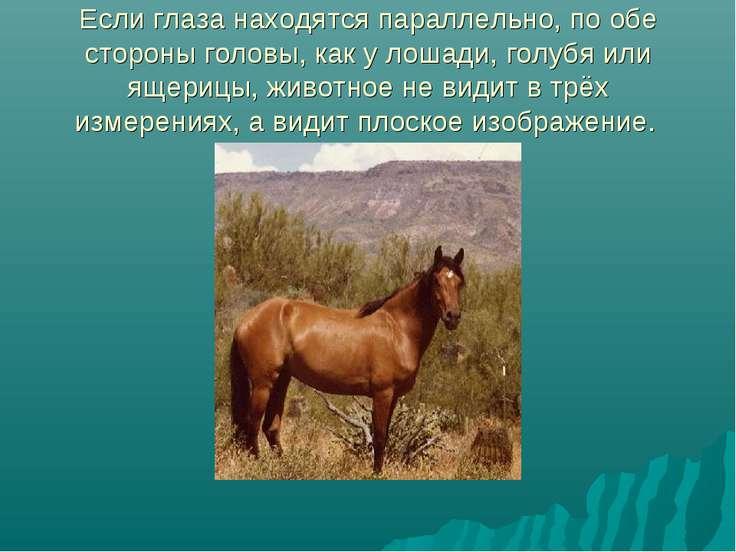 Если глаза находятся параллельно, по обе стороны головы, как у лошади, голубя...