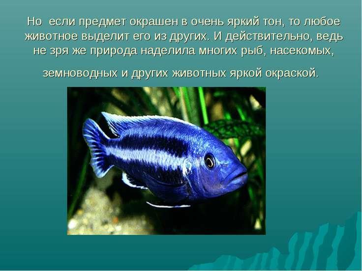 Но если предмет окрашен в очень яркий тон, то любое животное выделит его из д...
