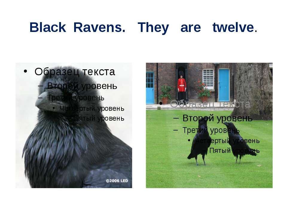 Black Ravens. They are twelve.