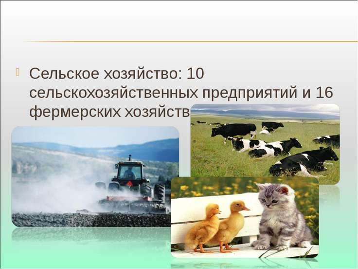 Сельское хозяйство: 10 сельскохозяйственных предприятий и 16 фермерских хозяй...