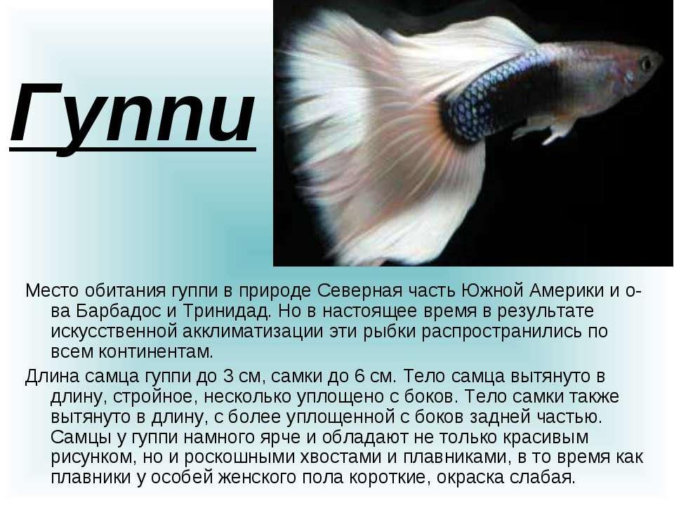 проект о рыбках в картинках той