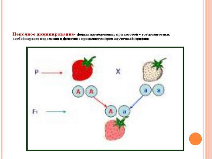 Неполное доминирование- форма наследования, при которой у гетерозиготных особ...