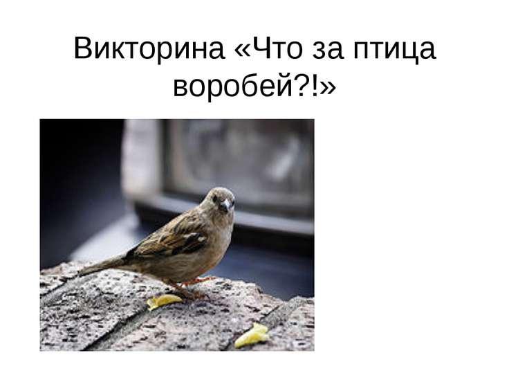 Викторина «Что за птица воробей?!»