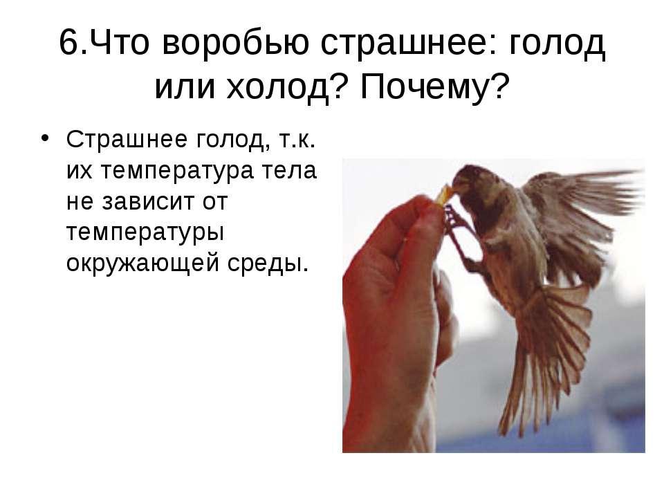6.Что воробью страшнее: голод или холод? Почему? Страшнее голод, т.к. их темп...