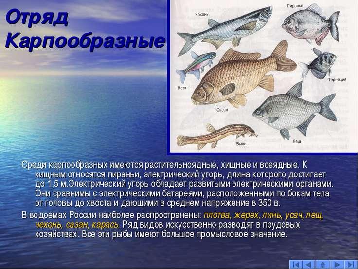 Презентацию по биологии на тему лососеобразные