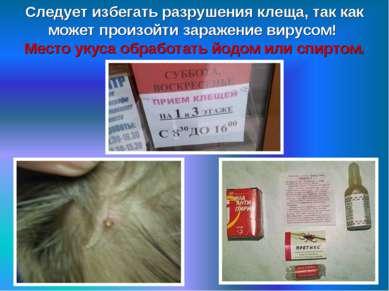 Следует избегать разрушения клеща, так как может произойти заражение вирусом!...