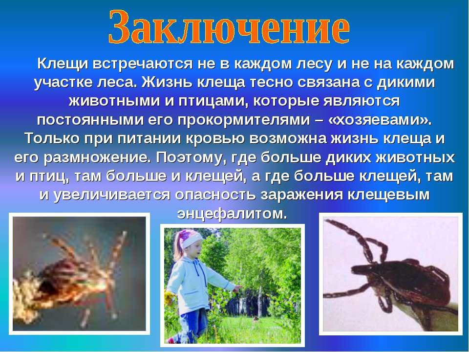 Клещи встречаются не в каждом лесу и не на каждом участке леса. Жизнь клеща т...