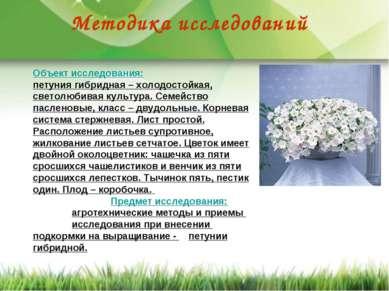 Методика исследований Объект исследования: петуния гибридная – холодостойкая,...