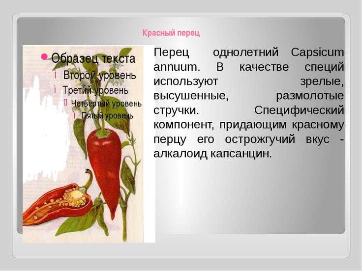 Красный перец Перец однолетний Capsicum annuum. В качестве специй используют ...
