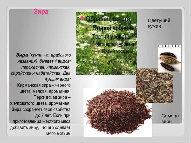 Зира Зира (кумин –от арабского названия) бывает 4 видов: персидская, кирманск...