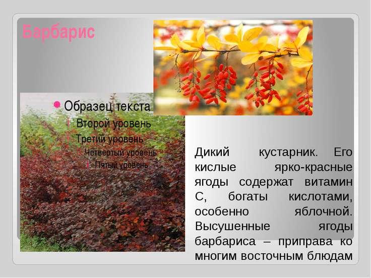 Барбарис Дикий кустарник. Его кислые ярко-красные ягоды содержат витамин С, б...