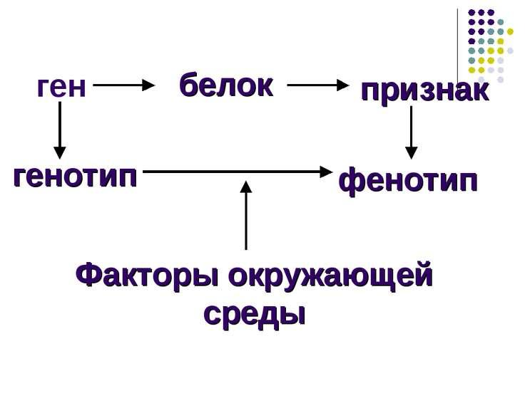 ген белок признак генотип фенотип Факторы окружающей среды