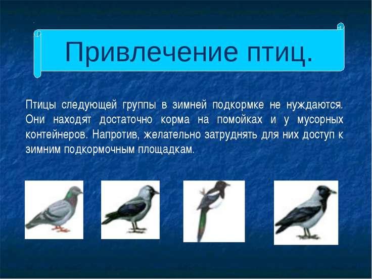 Привлечение птиц. Птицы следующей группы в зимней подкормке не нуждаются. Они...