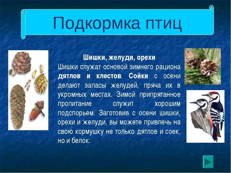 Подкормка птиц Шишки, желуди, орехи Шишки служат основой зимнего рациона дятл...