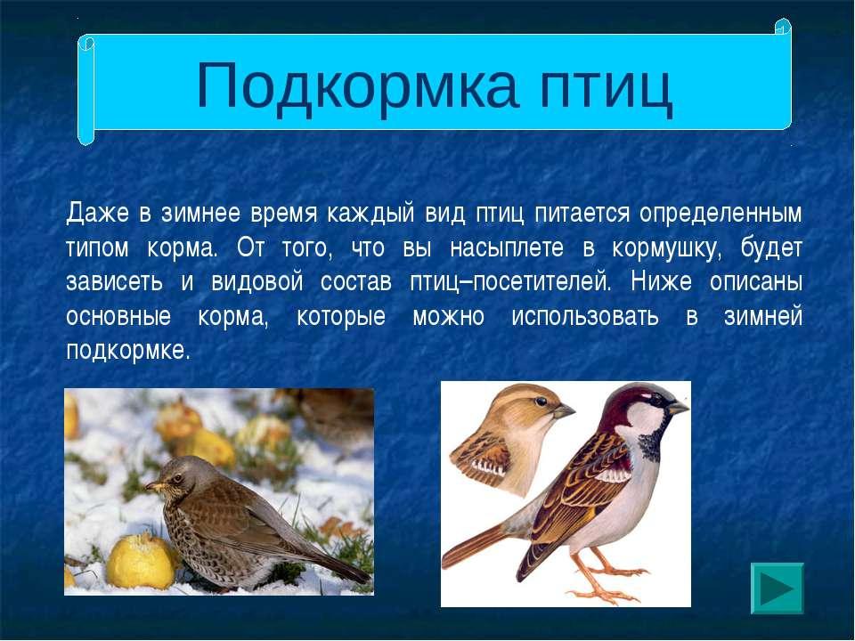 Подкормка птиц Даже в зимнее время каждый вид птиц питается определенным типо...