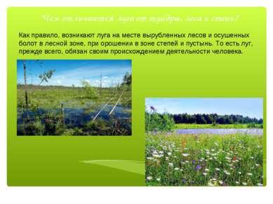 Чем отличаются луга от тундры, леса и степи? Как правило, возникают луга на м...