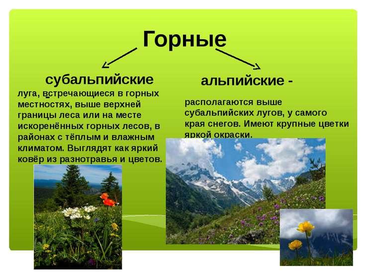 Горные субальпийские - альпийские - луга, встречающиеся в горных местностях, ...
