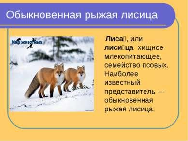 Обыкновенная рыжая лисица Лиса , или лиси ца хищное млекопитающее, семейство...