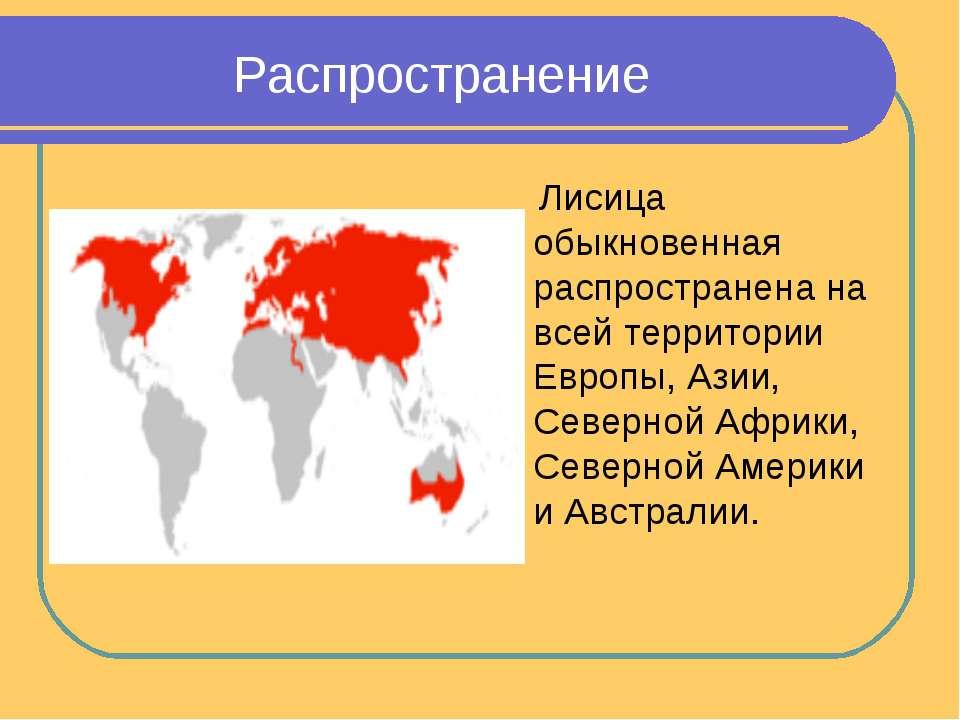 Распространение Лисица обыкновенная распространена на всей территории Европы,...