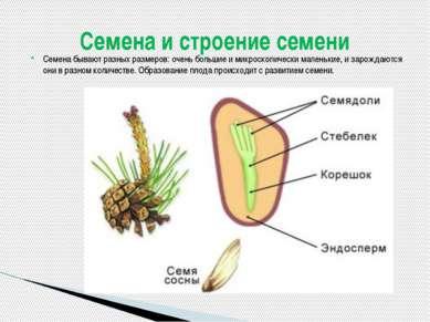 Семена бывают разных размеров: очень большие и микроскопически маленькие, и з...