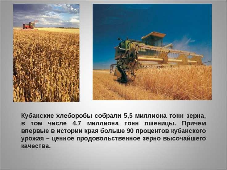 Кубанские хлеборобы собрали 5,5 миллиона тонн зерна, в том числе 4,7 миллиона...