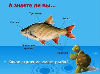 А знаете ли вы… Какое строение имеет рыба? Голова Жаберная крышка Хвост Плавн...