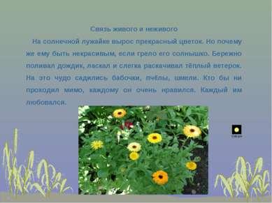 Связь живого и неживого На солнечной лужайке вырос прекрасный цветок. Но поче...