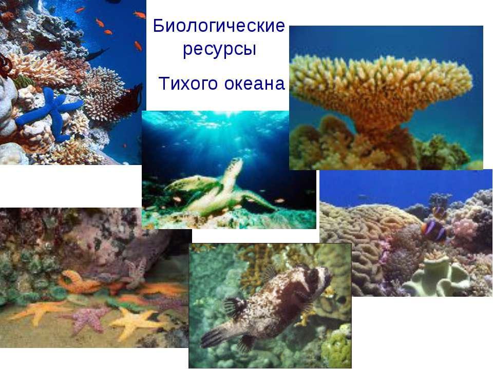 Биологические ресурсы Тихого океана