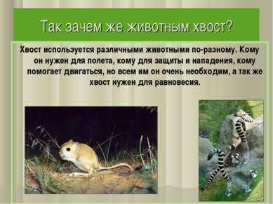 Так зачем же животным хвост? Хвост используется различными животными по-разно...