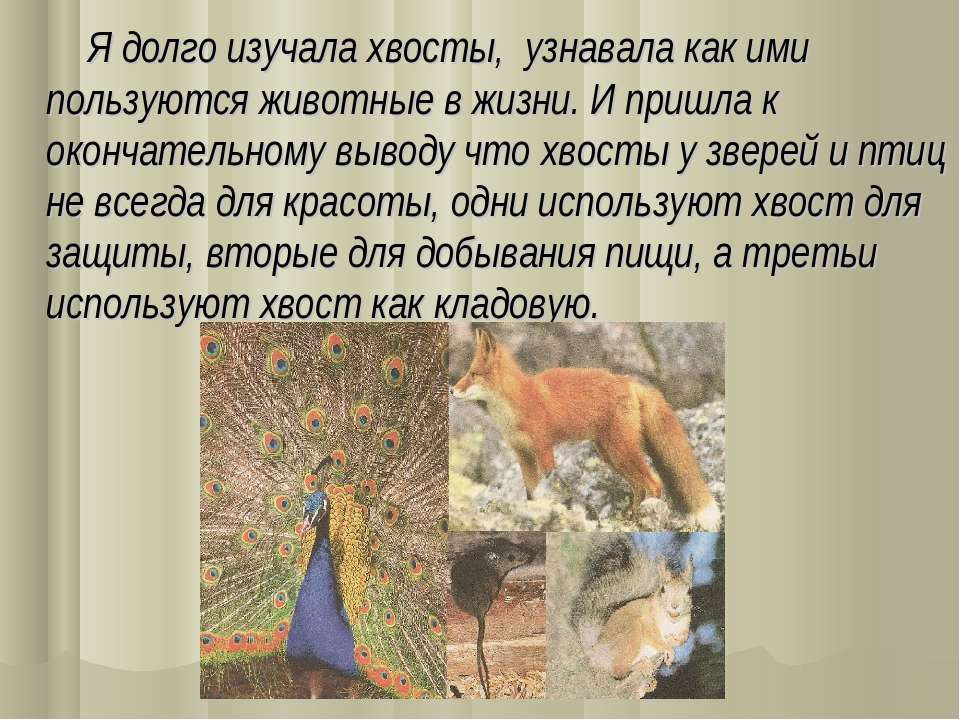 Я долго изучала хвосты, узнавала как ими пользуются животные в жизни. И пришл...