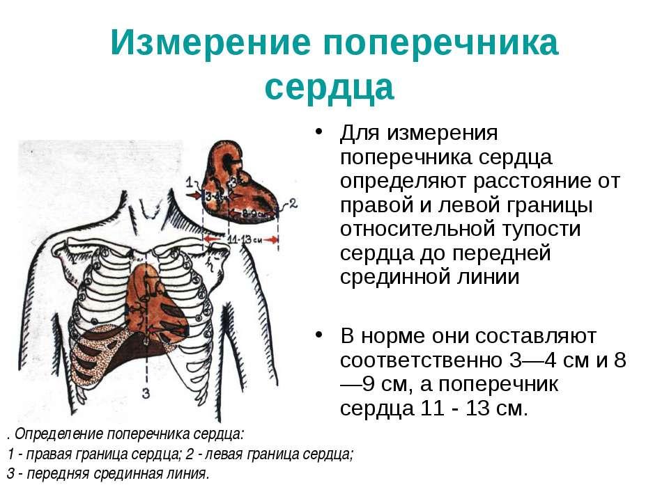 Измерение поперечника сердца Для измерения поперечника сердца определяют расс...