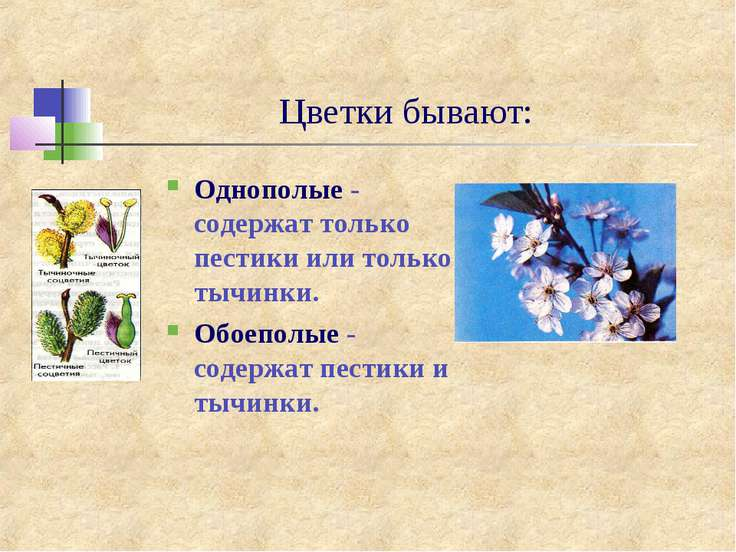 Цветки бывают: Однополые - содержат только пестики или только тычинки. Обоепо...