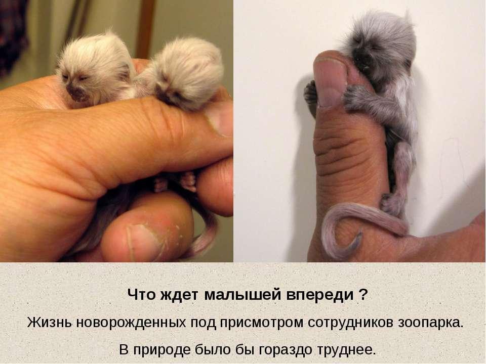 Что ждет малышей впереди ? Жизнь новорожденных под присмотром сотрудников зоо...